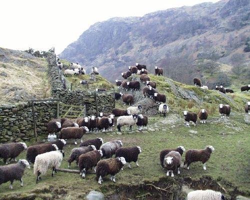 Herd6