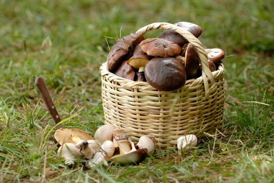 Mushroombasket_5