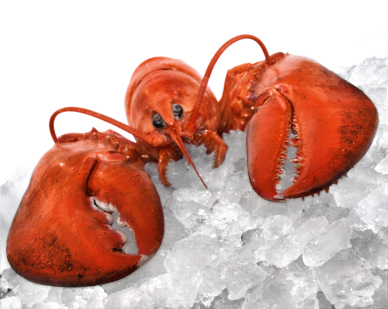 Lobster_2